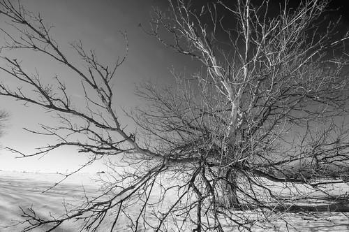 winter blackandwhite bw snow ontario canada tree monochrome cemetery graveyard king stpauls wideangle getty disused pioneer presbyterian gettyimages saintpauls highway27 yorkregion nobleton kingtownship 16thsideroad