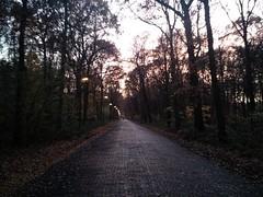Haagse Bos at dusk