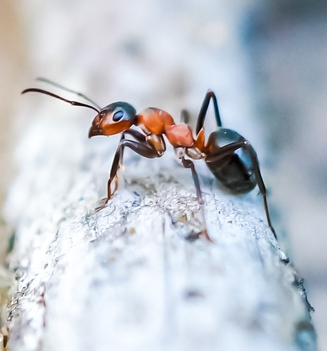 Ant guard | by beerxxl