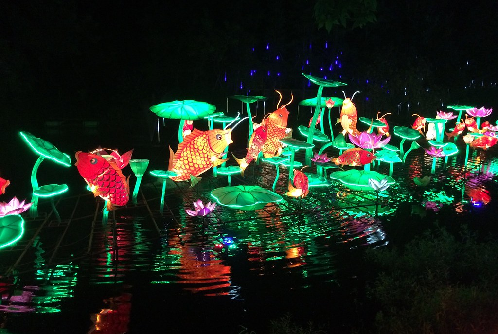 Lowry Park Zoo Christmas.Tampa Lowry Park Zoo Zoominations Fish Lily Pads