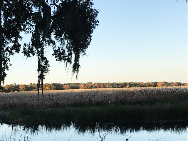 Rice field at Magnolia Gardens and Plantations