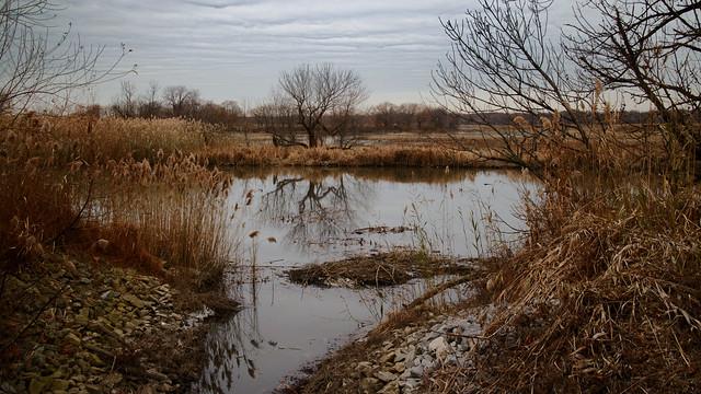 Lone marsh tree