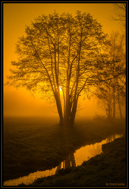 Yellow dawn