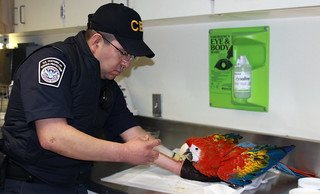 CBP Agriculture Specialists Intercept Macaw Lacking Export Certification | by CBP Photography