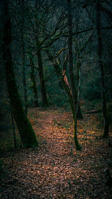 Dark forest II