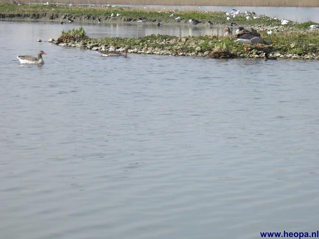 24-03-2012 rs'80 Bleiswijk 25 Km  (43)