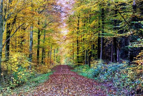 herbst farbe baum wald buche buchenwald stuttgart badenwürttemberg
