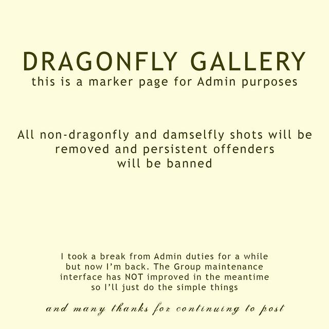 GalleryMarkerDragonfly