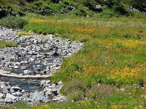 Wildflowers along the South Breitenbush River
