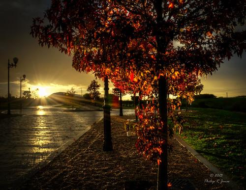 autumn fall maple acer hdr mapleleaves wintersun goldenlight 3xp