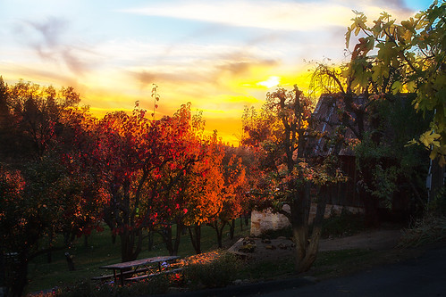 sunset color fall vineyard winery placerville wtd boegerwinery obiewalks