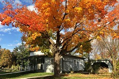 Autumn Scene at Black Creek Pioneer Village