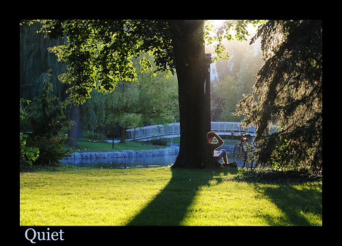 park bridge sunset sunlight nature beautiful reading still student pond victoriapark quiet shadows restful ducks peaceful bugs study flies lovely studying tranquil youngman goldenhour bicyle mapletrees willowtrees flyinginsects amazinglight sprucetrees victoriaparkisland
