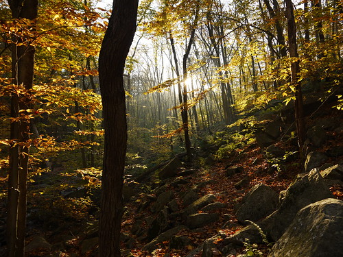 autumn nature forest sunrise newjersey hacklebarneystatepark