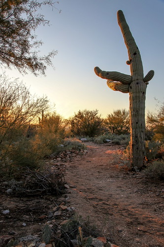 sunset 2 arizona cactus cacti sunrise canon eos glow mark trail ii 5d saguaro mk sahuaro westwardlook