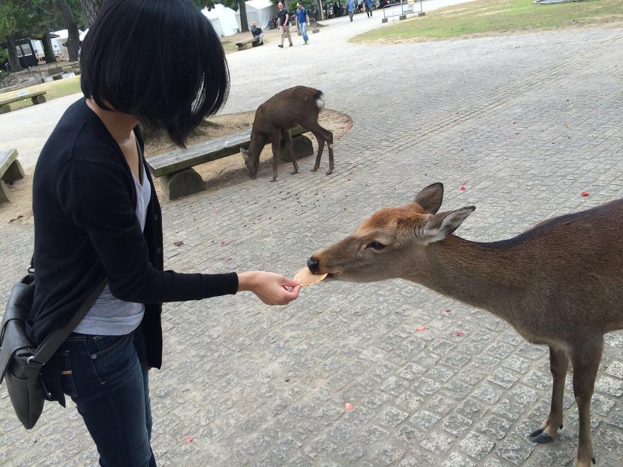 Tang, Christine; Hong Kong - Feeding Deer