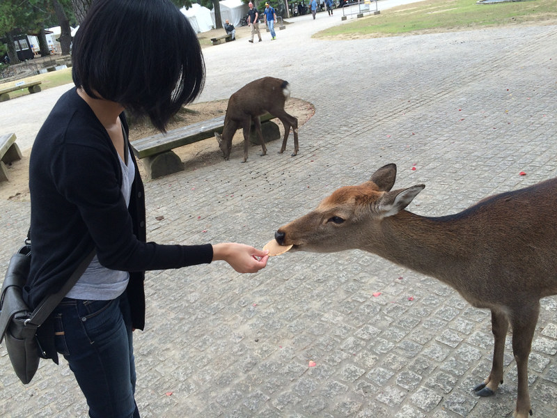 Tang, Christine; Hong Kong - Feeding Deer