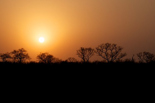 The classic safari sunset shot | by rogersmj
