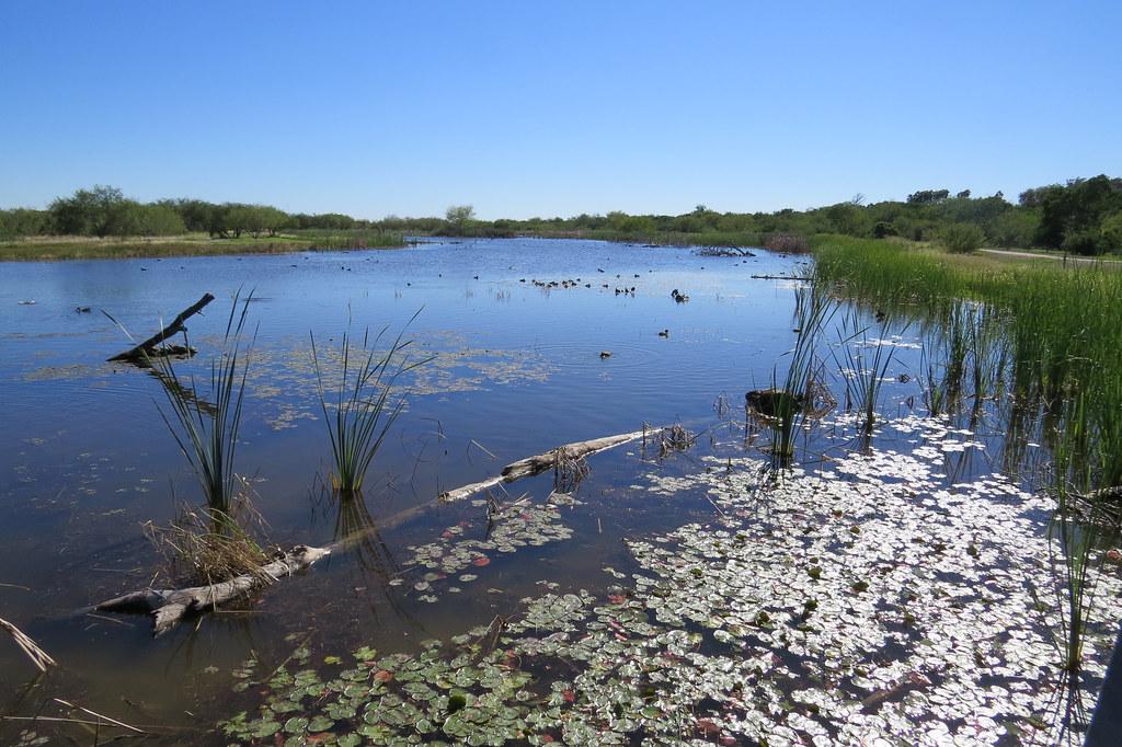 Estero Llano Grande | Estero Llano Grande State Park ...