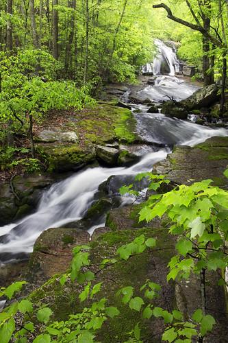 virginia waterfall spring stream hiking nationalforest gorge blueridge appalachians swva westernvirginia roaringrun