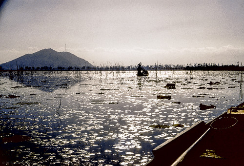 india kashmir srinagar inde in dallake cachemire