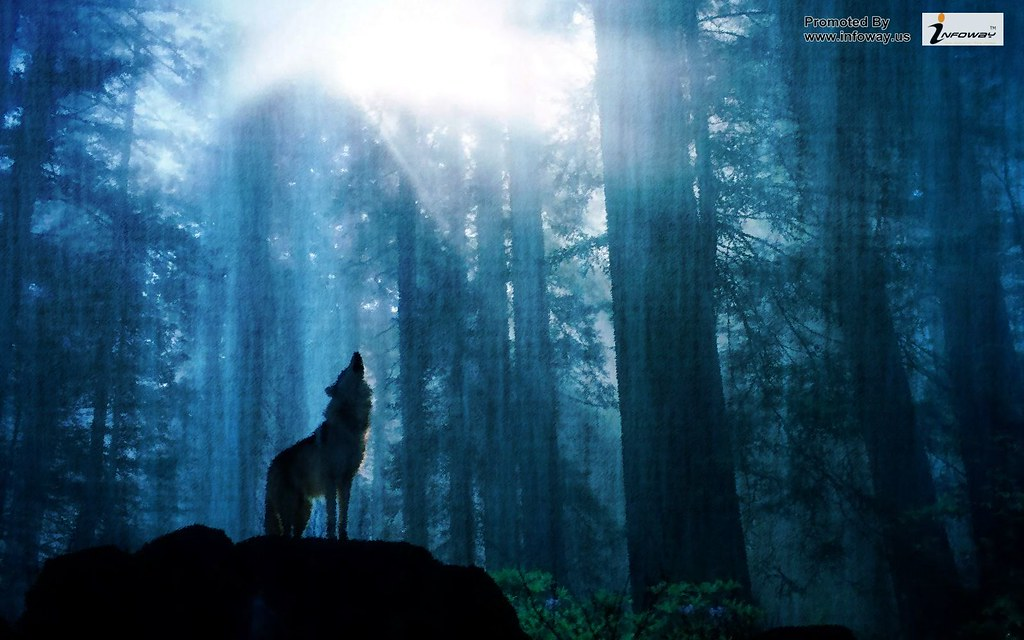 ... wolf wallpaper download animal wallpapers | by allen_smith35
