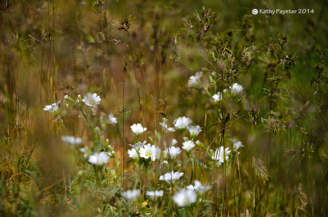 Mt Maxwell Wild Flowers