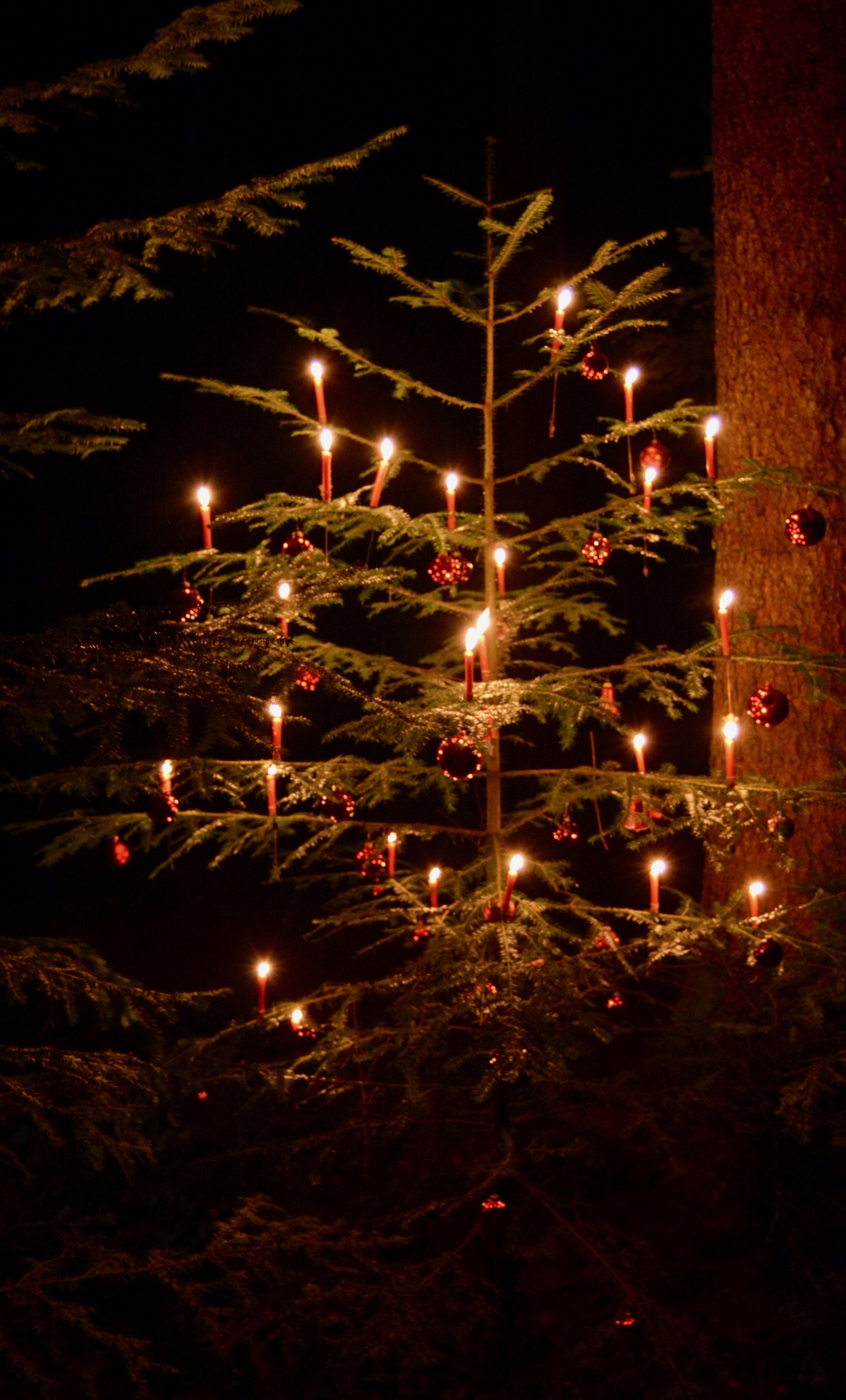 Verein - Waldweihnachten 2016