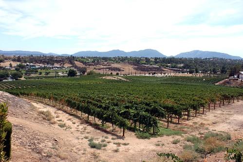california ca vineyard wine hill award hills winery winner tasting callaway temecula rolling winning konomark