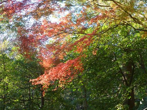 2013/11/30 (土) - 15:10 - 鎌倉の紅葉 ー 鎌倉宮