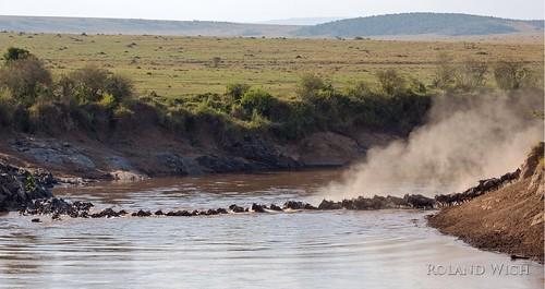 africa river crossing kenya mara afrika kenia masai gnu gnus wildebeest