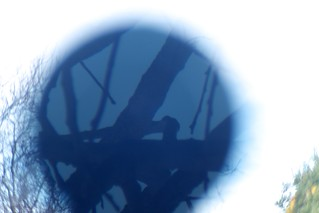 Tree through Galileoscope