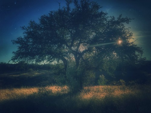 tree landscape nightshot dreamy treescape treetuesday mobilephotography solotree iphoneart retrolux iphoneography iphoneonly danapeakpark snapseed mobileartistry uploaded:by=flickrmobile flickriosapp:filter=nofilter