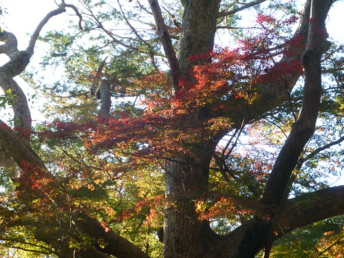 2013/11/30 (土) - 15:09 - 鎌倉の紅葉 ー 鎌倉宮