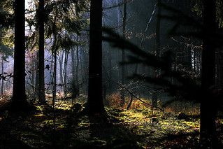 Deep in the woods   by Isengardt