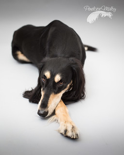 Saluki Slouch | by Penelope Malby Photography