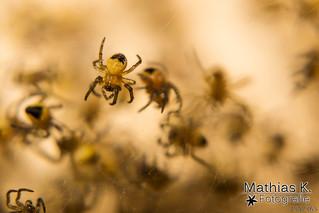 Spinnennest | Projekt 365 | Tag 134