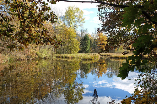 moorsee moorlake water germany bavaria berchtesgadenerland autumn trees reflections