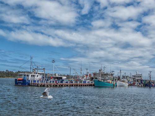 waterway lake wharf jetty boats fishingboats lakesentrance gippsland seascape gull accesstobassstrait