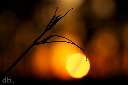 sunset silhouette canon florida bokeh okaloosa smilax northwestflorida borderfx bino99
