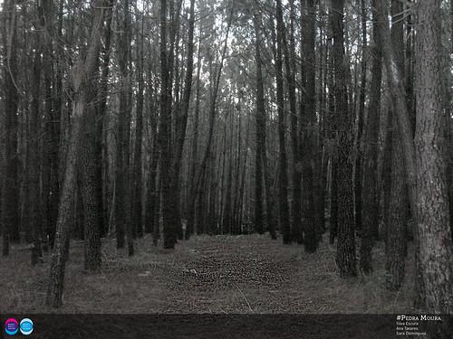 Em busca da Pedra Moura - parte 2