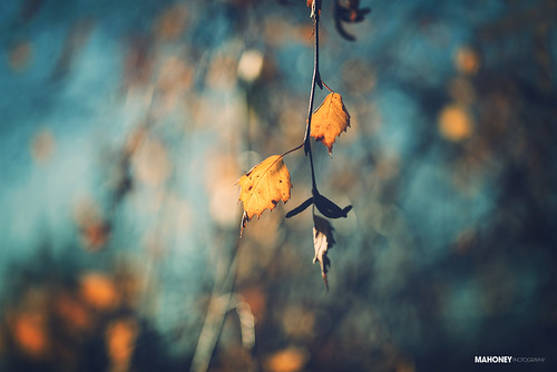 blue autumn light cold tree nature leaves canon prime leaf bokeh 100mm clear 5dmarkii