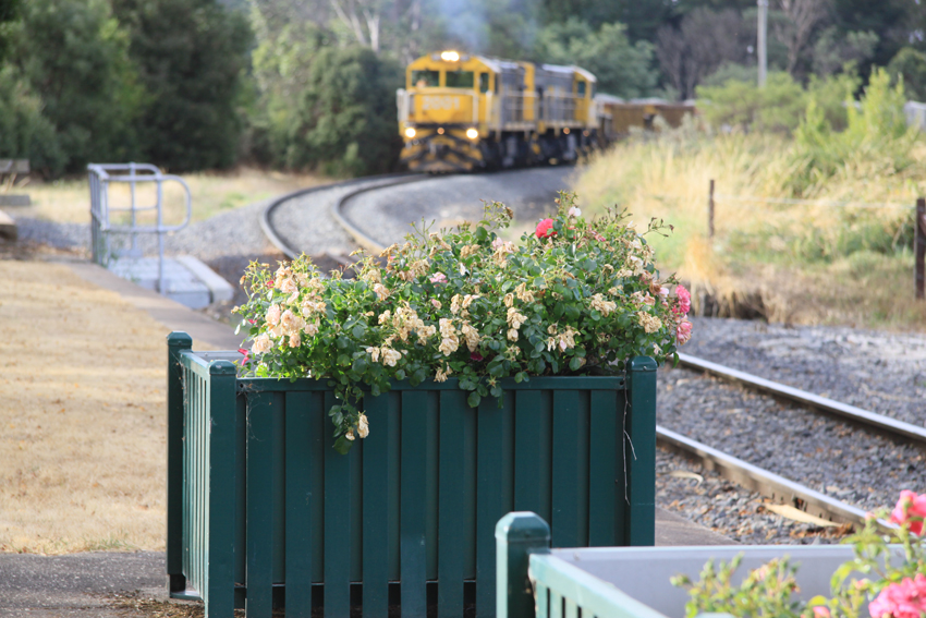 flowers by the western line by Damien Smith
