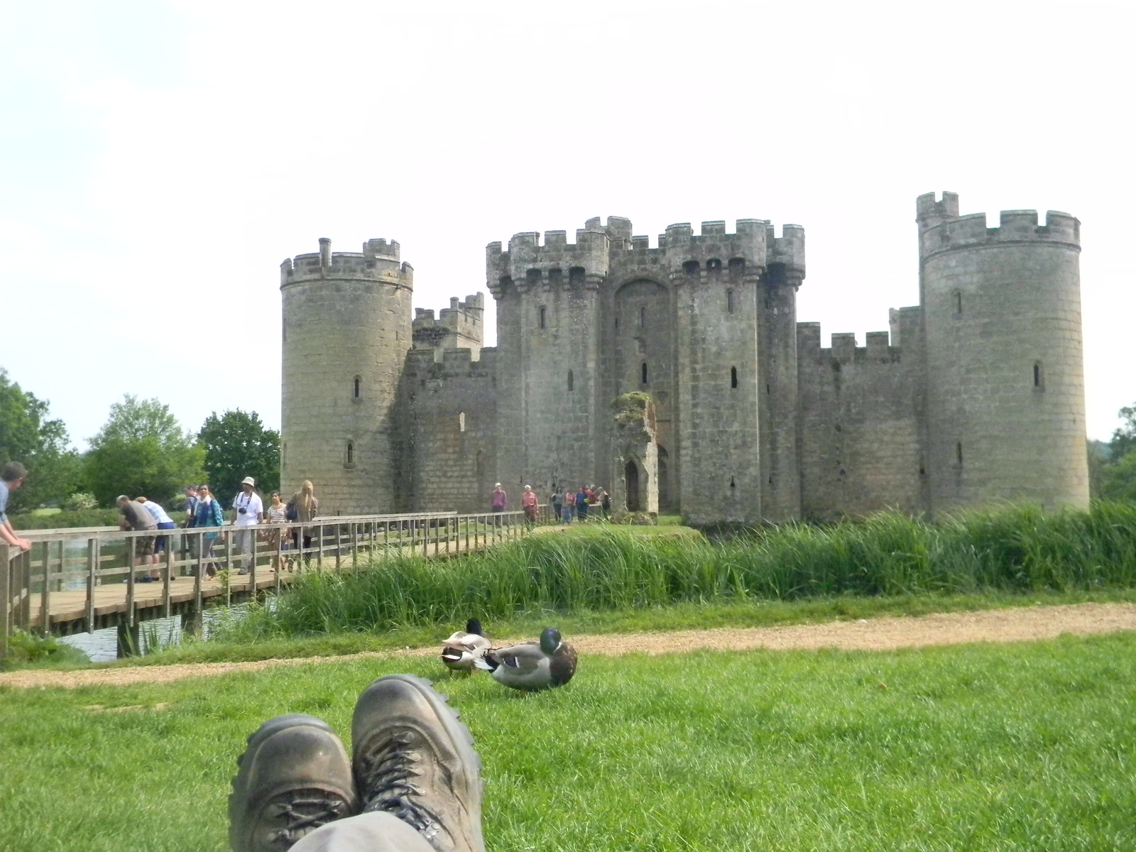Feet, ducks and castle Robertbridge (short) Circular