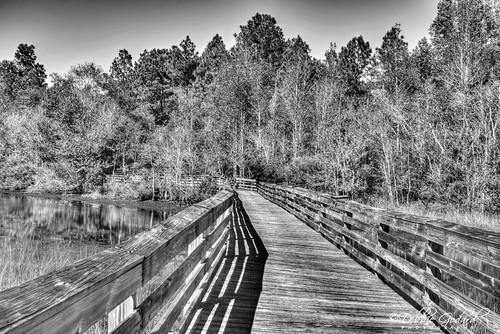 debbiegodard nikond750 blackwhite trees landscape bridge shadows escc camerasouth bellingrath alabama