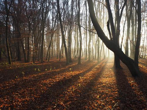 sunlight autumnsun forest olympus1442 olympusem10markii nature x8 x15