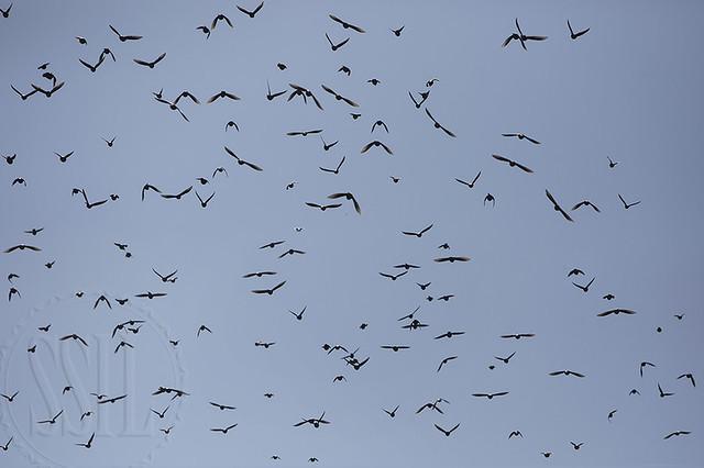 161018-7893-Birds