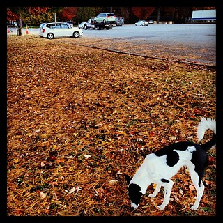 Kate couldn't care less that our van is being towed away. #sadday   by aussomedogs