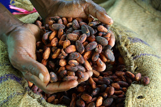 Cocoa farmer David Kebu Jnr holding the finished product, dried cocoa beans ready for export. | by DFAT photo library