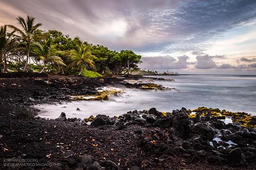 longexposure usa beach hawaii us flora nikon unitedstatesofamerica playa pahoa palmtree nikkor palma palmera d4 bigislandofhawaii exposiciónlarga neutraldensityfilter punadistrict isaachalebeachpark 2470mmf28g filtrodedensidadneutra 2013060918799